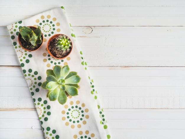 Pianta succulenta conservata in vaso sul tovagliolo sopra la tabella bianca
