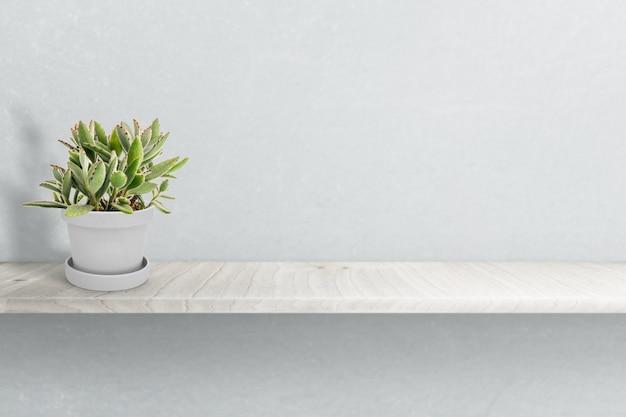 Pianta succulenta sul vaso isolato sull'ornamento bianco del vaso