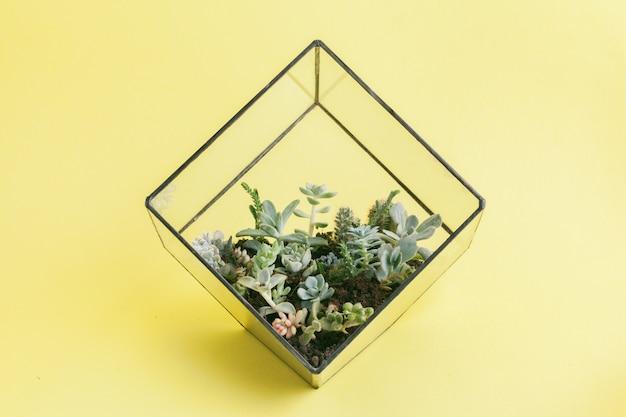 Pianta succulenta