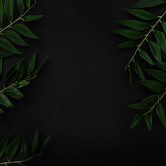 Pianta tropicale con tono di colore delle foglie verdi su fondo nero