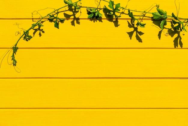Pianta tropicale dell'albero della zucca amara sulla vista superiore del fondo di legno giallo.