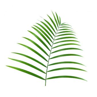 Pianta tropicale diagonale festa foglio di palma