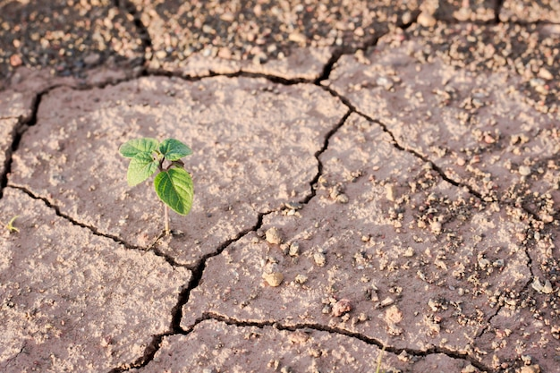 Pianta verde che cresce dalle crepe nella terra