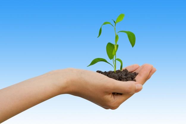 Pianta verde con terra in una mano