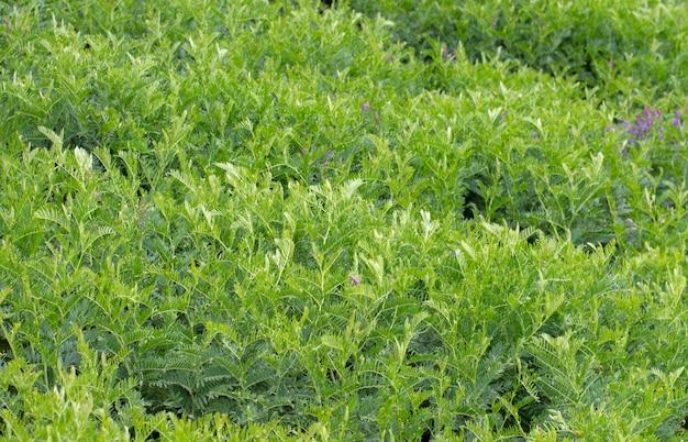 Pianta verde del fondo di struttura