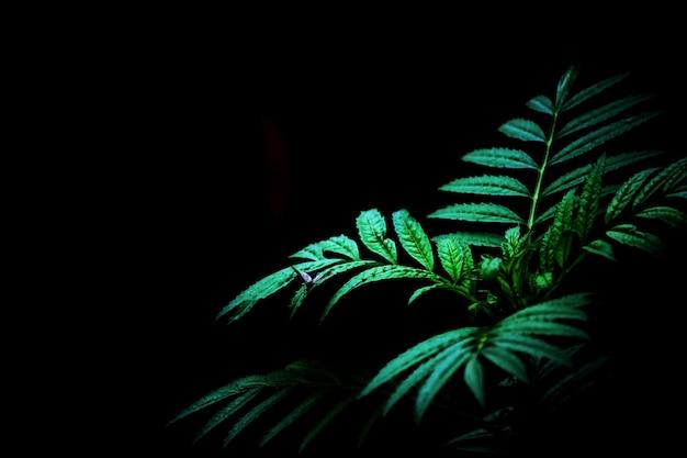 Pianta verde e sfondo scuro in natura
