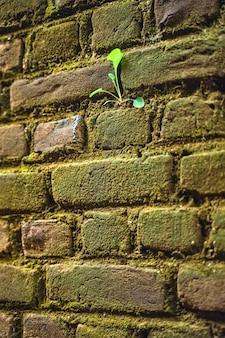 Pianta verde sul composto della parete della casa