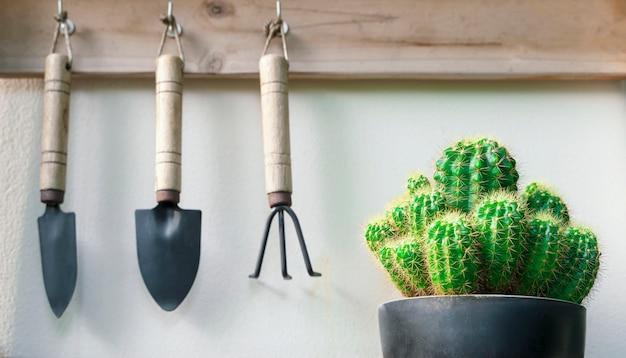 Pianta verde sul vaso con spazio copia gratuita