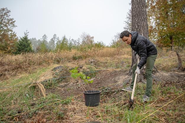 Piantagione di giovani alberi per la rigenerazione delle foreste dopo l'intervento di elementi naturali