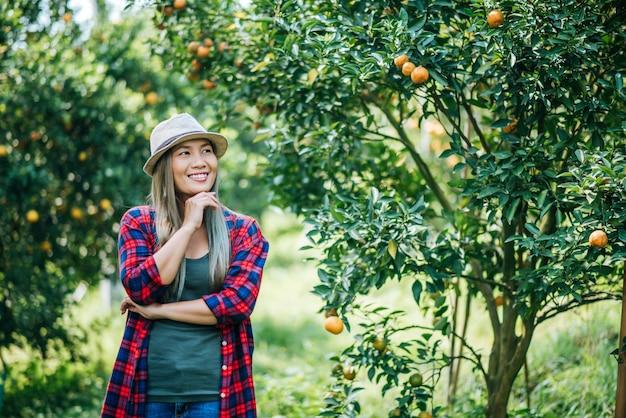 Piantagione di orange