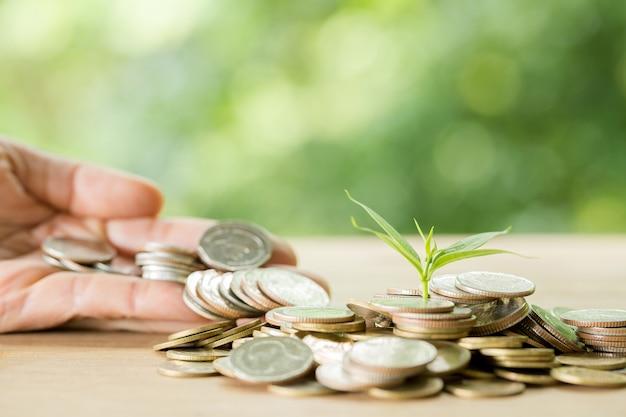 Piantare alberi su un mucchio di monete con la luce solare