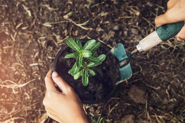Piantare albero in giardino. il concetto salva la terra verde del mondo