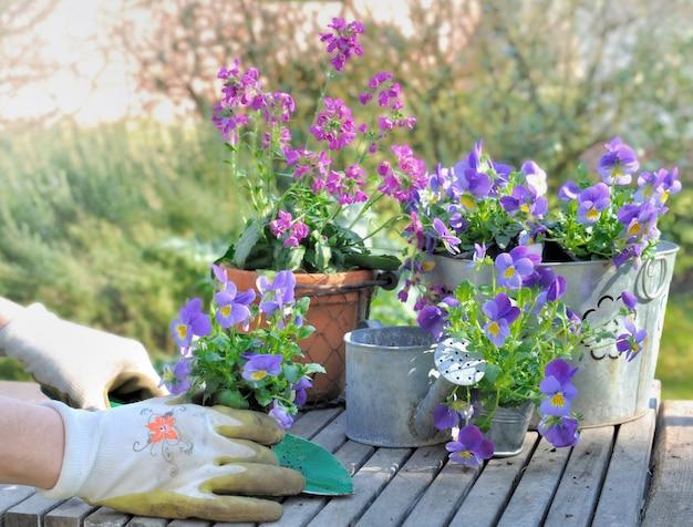 Piantare fiori in giardino