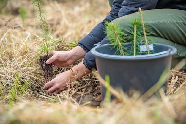 Piantare giovani alberi nella foresta dopo devastanti fiammate e siccità