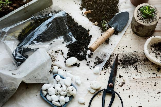 Piantare piante cactus suolo pietre su un tavolo di legno