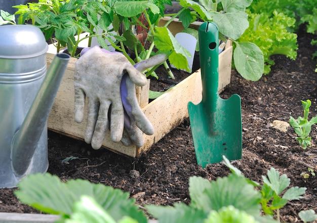 Piantare piante vegetali