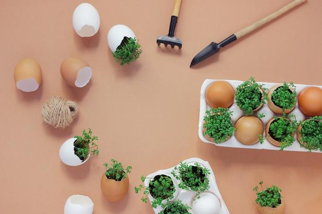 Piantare piantine in gusci d'uovo e coltivare micro-piante utili a casa