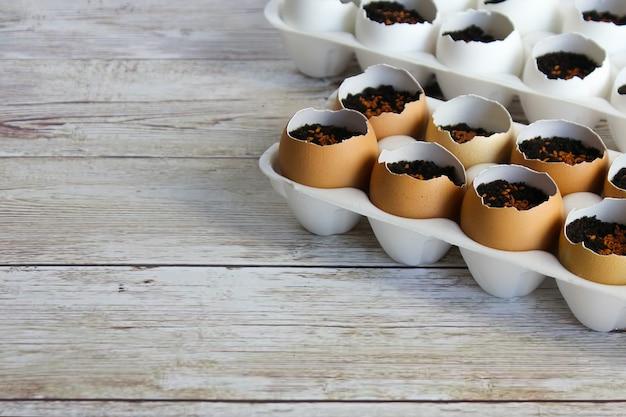 Piantare piantine in gusci d'uovo