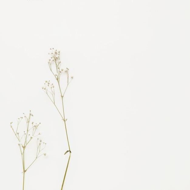 Piantare rami con piccoli fiori