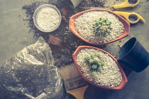 Piantatura del cactus in vasi sul concetto delle piante dell'interno della tavola del cemento.