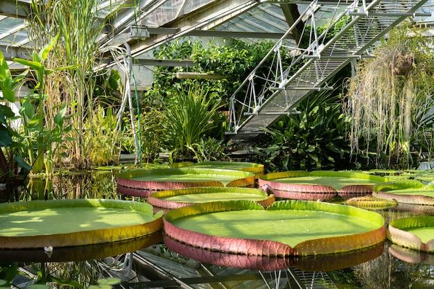 Piante acquatiche tropicali in una serra