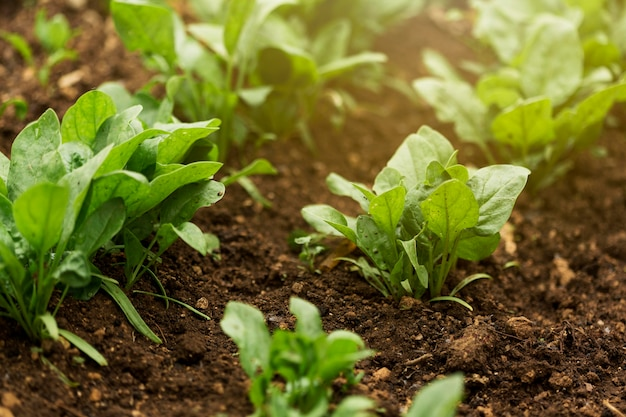 Piante ad alto angolo con foglie verdi