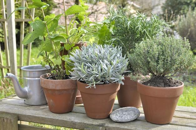 Piante aromatiche in vaso in giardino