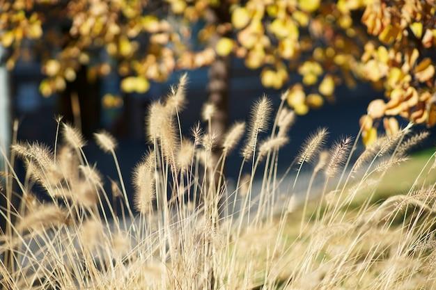 Piante autunnali selvagge con toni gialli e arancioni. sfondo per creazioni.