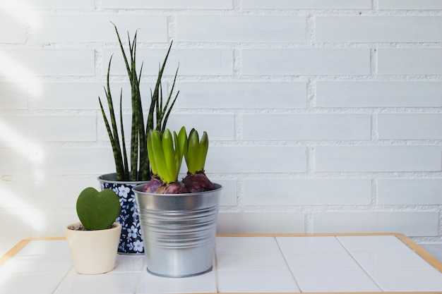 Piante da appartamento in casa. decoconcept del minimalismo. spazio per il testo