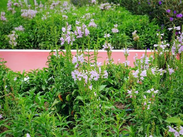 Piante da fiore rosa del primo piano da red walkway nel parco