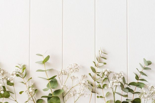 Piante decorative su uno sfondo