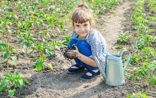 Piante del bambino e piante di innaffiatura nel giardino. messa a fuoco selettiva