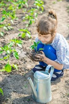 Piante del bambino e piante di innaffiatura nel giardino.