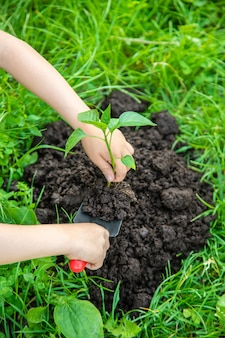 Piante del bambino e piante di innaffiatura nel giardino