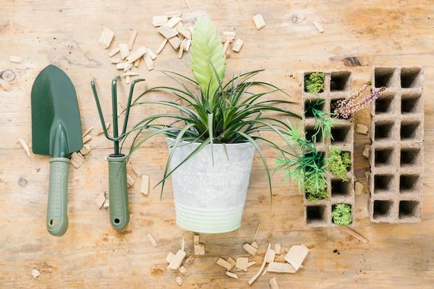 Piante del bambino sul vassoio della torba con gli strumenti di giardinaggio con la pianta in vaso sullo scrittorio di legno
