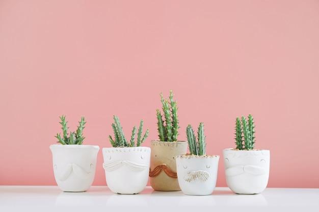 Piante di casa in vaso del cactus sullo scaffale bianco contro la parete rosa.