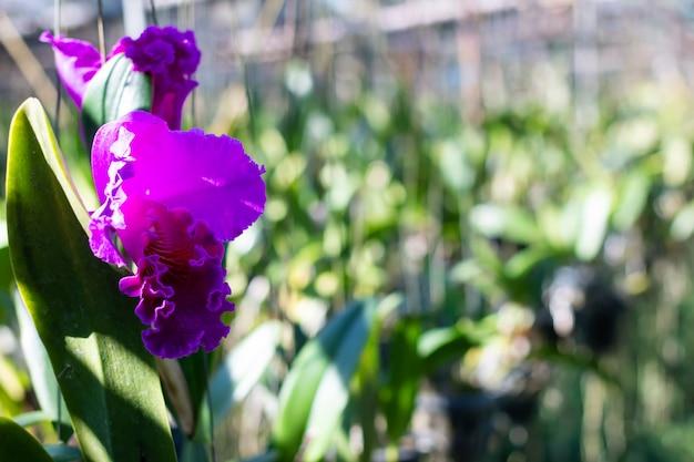 Piante di fiore fresche delle orchidee nella scuola materna dell'orchidea