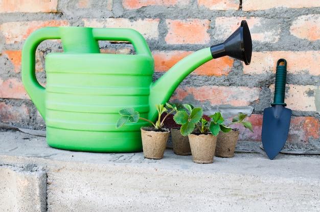 Piante di fragola con attrezzi da giardinaggio.