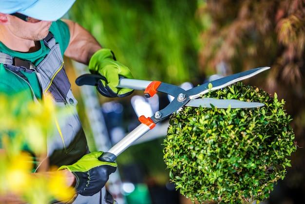 Piante di taglio del giardiniere