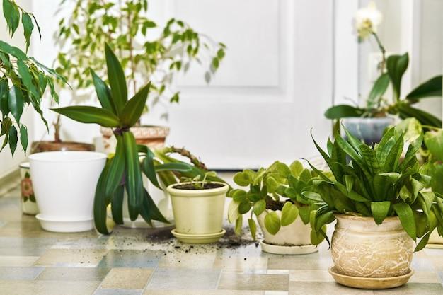 Piante domestiche, fiori e vasi vuoti sul pavimento.