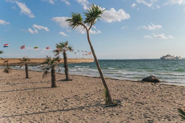 Piante e cambiamenti climatici con il concetto di riscaldamento globale. palme sulla spiaggia scandinava