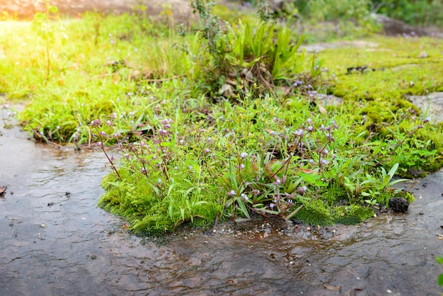 Piante ecosistemi e fiore in