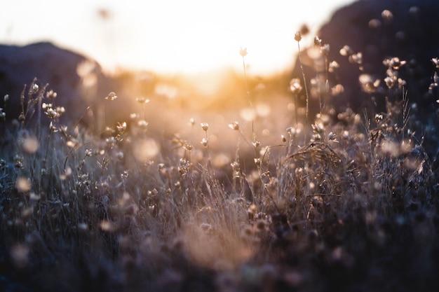 Piante fiorite minuscole con tramonto e montagne