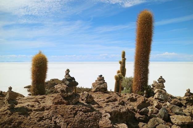 Piante giganti del cactus e pietre di cairn su isla incahuasi, sale del sale di uyuni, bolivia