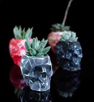 Piante grasse in vaso a forma di teschio isolato su acrilico nero
