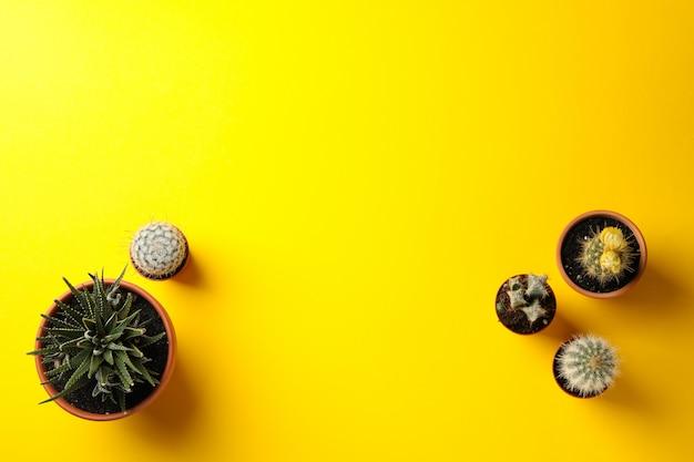 Piante grasse su superficie gialla e spazio per testo