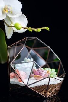 Piante succulente in scatola di vetro e fiore di orchidea