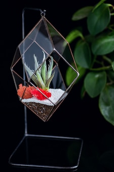 Piante succulente in scatola di vetro