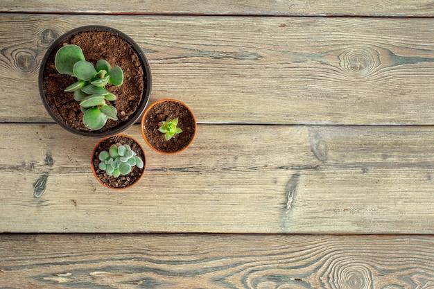 Piante succulente raggruppate sul tavolo