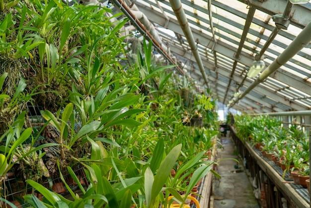 Piante tropicali ornamentali nella serra.